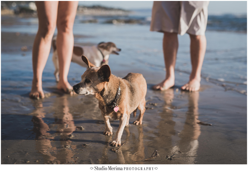 del mar dog beach engagement photography, including dogs in your engagement photos