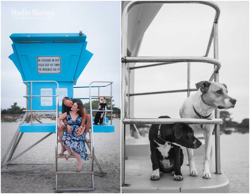 coronado dog park maternity photography, san diego maternity photographer, coronado dog park family photography