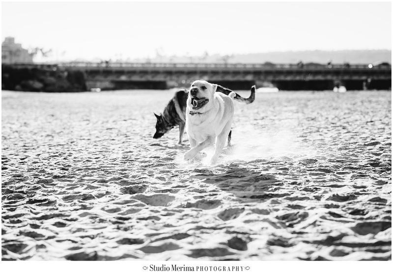 Del Mar Dog Beach Photography