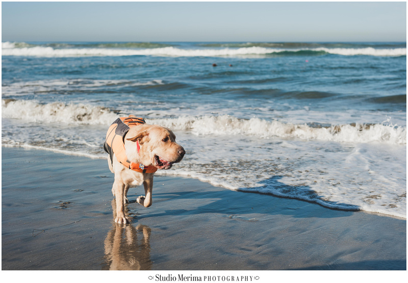 Del Mar Dog Beach Photography